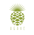 design template of the agave plant
