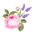 label with rose flowers vector image vector image