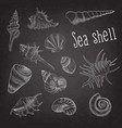 seashells hand drawn aquatic doodle on blackboard vector image