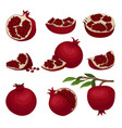 flat set of red ripe pomegranates healthy vector image