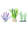 seaweed for aquarium sketch vector image vector image