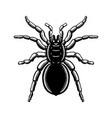 spider in engraving style halloween theme design vector image
