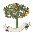 orange tree with blank label on white background vector image