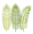tropical leaves design vector image vector image