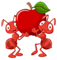 Two ants holding red apple vector image vector image