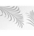 two transparent shadows from palm leaves vector image vector image