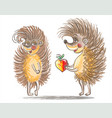 couple of hedgehogs vector image vector image