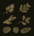 gold fir branches and cones doodle set vector image vector image