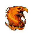 phoenix sport mascot logo design vector image