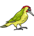 yaffle bird animal cartoon vector image