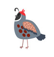 quail cartoon bird icon vector image vector image