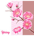 spring background with sakura or cherry blossom vector image