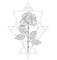 polygonal rose vector image vector image