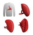 spleen icon set cartoon style vector image vector image