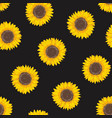 botanical seamless pattern with sunflower heads vector image vector image