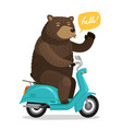 funny bear riding a scooter circus concept vector image vector image