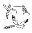 hand drawn sketch of birds isolated on vector image vector image