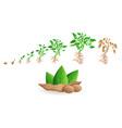 soybean icon set cartoon style vector image