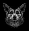 pembroke welsh corgi graphic black and white vector image
