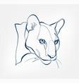 puma lion cat animal wild one line design vector image