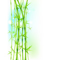 bamboo green asian trees on white background vector image