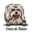 peeking dog - coton de tulear - dog breed color vector image vector image