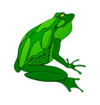 bright green big frog drawing isolated vector image