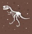 dinosaur skeleton in the ground vector image