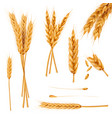 wheat ears and seeds realistic collection vector image vector image
