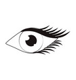 women eye cartoon in black and white vector image vector image