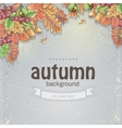 Image of autumn background with maple leaves oak vector image vector image