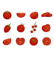 tomato red vegetable set in different slices vector image