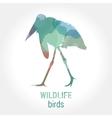 Wildlife banner - birds marabou vector image vector image