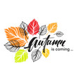 Fall background design with colorful autumn leaves