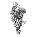 hand drawn bunch grapes vector image