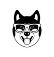 portrait of akito inu with glasses vector image vector image