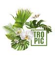 tropic plants banner vector image vector image