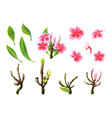 tropical pink plumeria flowers branches vector image vector image