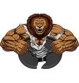 angry lion strong vector image vector image