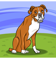 boxer purebred dog cartoon vector image vector image