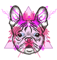 Sketch Hipster French bulldog face in triangle vector image vector image