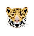 Leopard-380x400 vector image