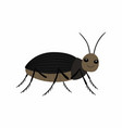 black beetle on a white background vector image vector image