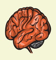 brain4 resize vector image vector image