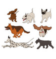 collection dog breeds icons vector image
