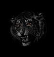 portrait of a tiger head on a black background vector image