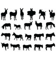 silhouettes donkeys vector image
