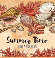 summer time seashells sea holiday and vacations vector image vector image