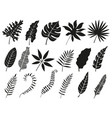 palm leaf silhouette monstera frond plant leaves vector image