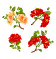 branches yellow and red hibiscus tropical flowers vector image vector image